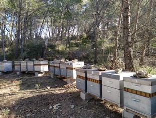 L'hiver dans la ruche