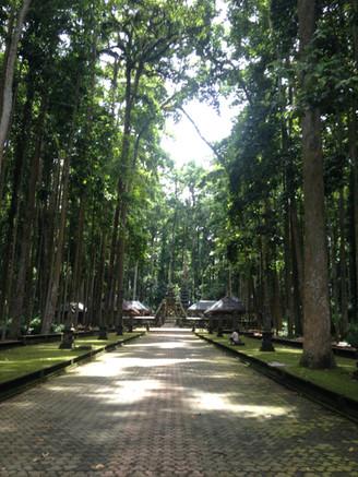 Was du unbedingt auf Bali  erleben musst!