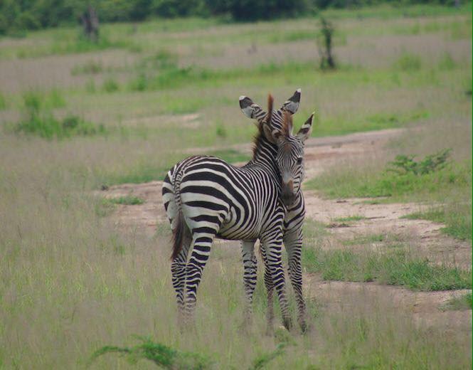 Zwei Wochen in Malawi und Sambia