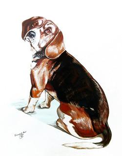 Bobby Beagle