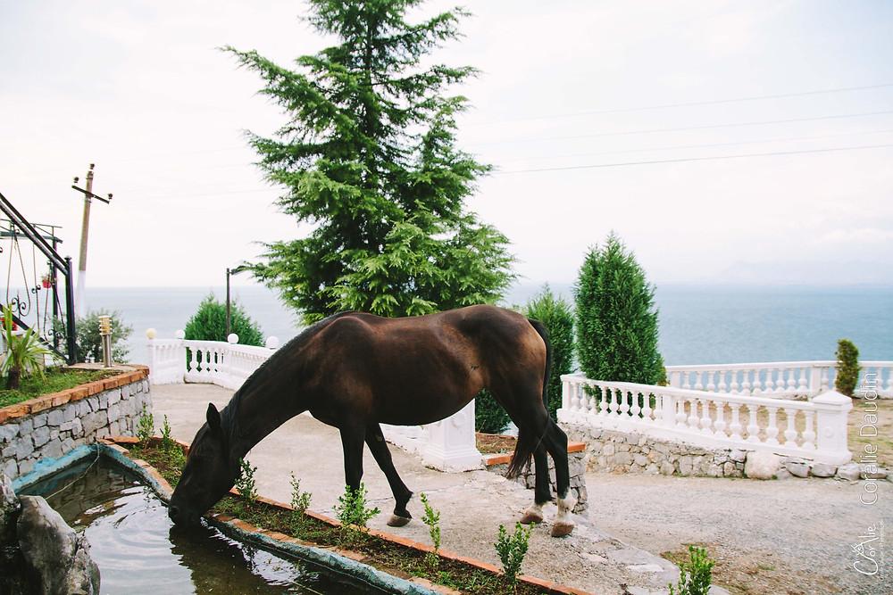 Lac Shkodër