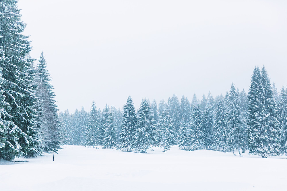 Photo sapins neige hiver 2018