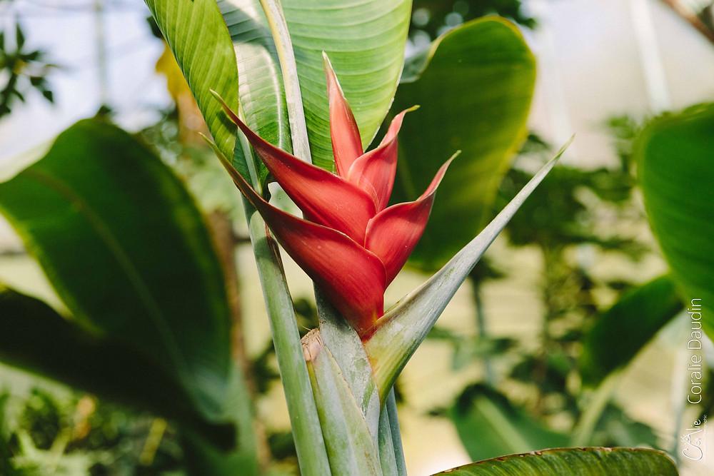 fleur tropicale dans une serre