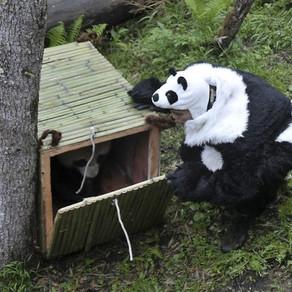 J'aime mon job #1 : Sauveur de panda