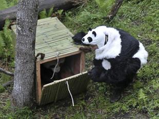 J'aime mon job #1 : Sauveur de pandas