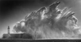 Wild horses in the breaking waves.jpg
