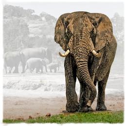 ELEPHANT 2D  -  DNO_0428.jpg