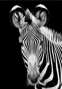 Zebra Ver 0.jpg