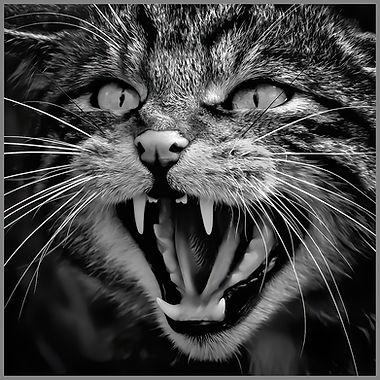 Scottish Wild Cat.jpg