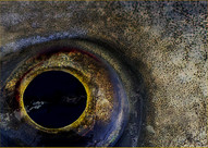 Beauty is in the eye of the fish - OLB21