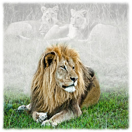 LION 1 B DNO_0267.jpg