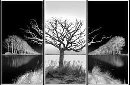Tree Triptych.jpg