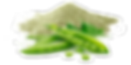 Pea Protein2.png