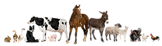 Domestic Animals_clipped_rev_1.png