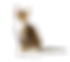 Cat Transparent.png