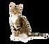 Cat Transparent.png