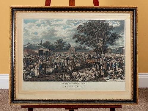Rare Proof Print of Woburn Sheep Shearing