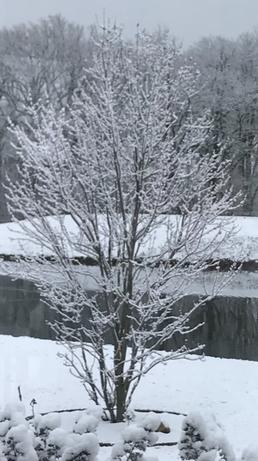 Winter - Janet Keistler.png