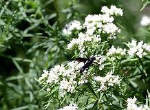 elgin wasp.jpg
