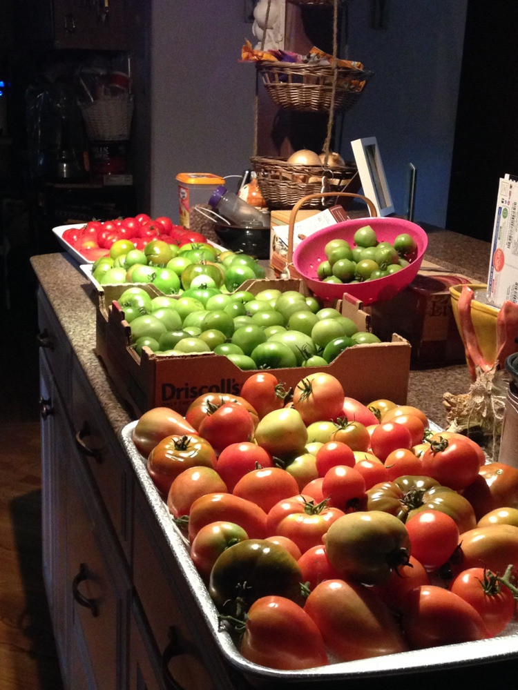 Tomato Harvest - Carol Ohrn_edited.jpg