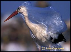 Birds becomes victim of plastic bags