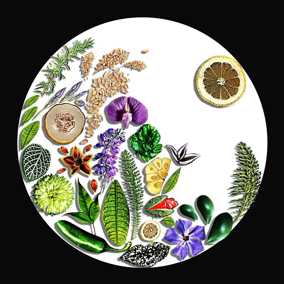 Kingdome Plantae