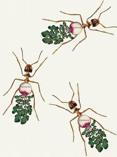 Cuadro original para casa de rábanos y hormigas