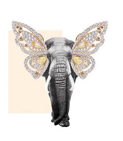 Colaboracion Pilsferrer con Rabat elefante