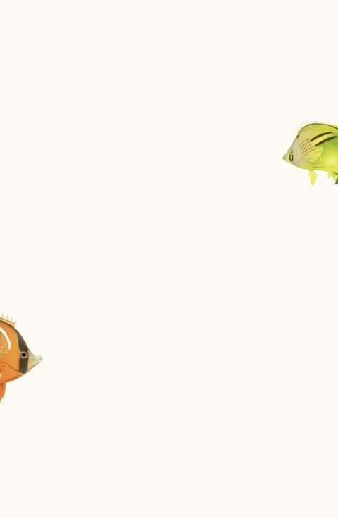 Peces Cítricos
