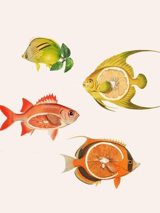 collage peces con cítricos