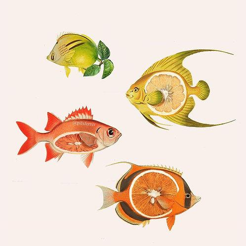 Collage de estilo surrealista de peces con cítricos