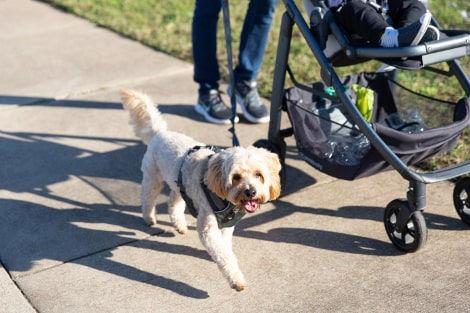 Ege Mahallesi'nde Köpekle Yürüş Yapan İnsanlar