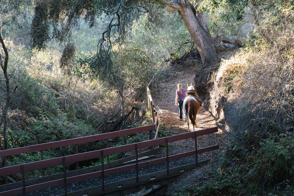 Davutlar'da At Çiftliği