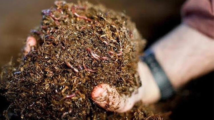 solucan gübresi toprak verimliği