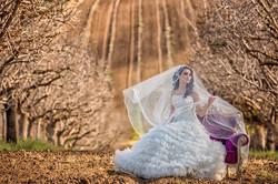 almond trees wedding