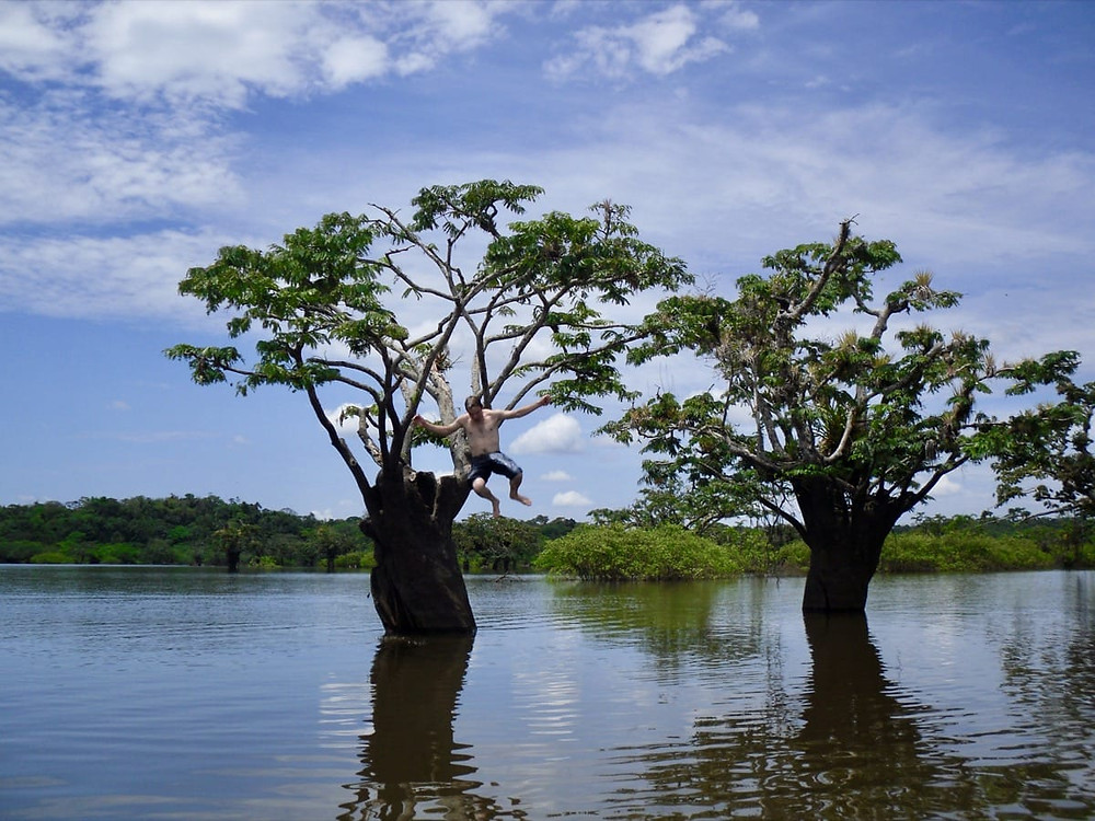 Ollie jumping from a tree and swimming in Cuyabeno Amazon - Ecuador
