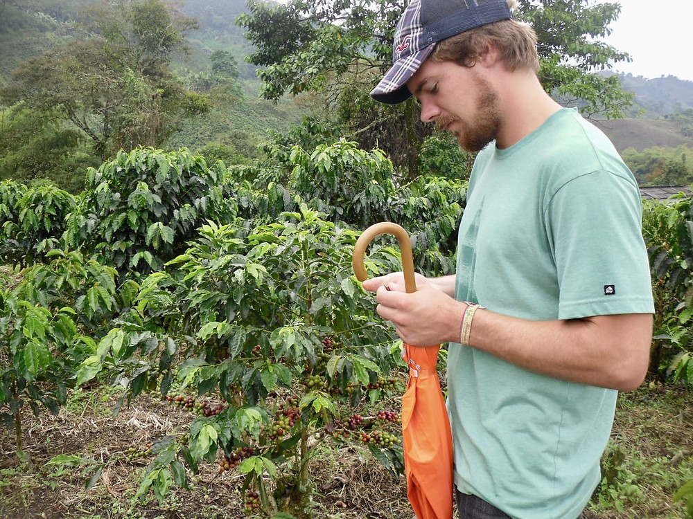 Ollie in a coffee plantation at Hacienda Guayabal in Colombia