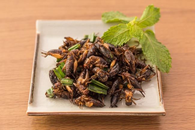 insectos comestibles winko