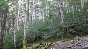 森と環境保全・木の家