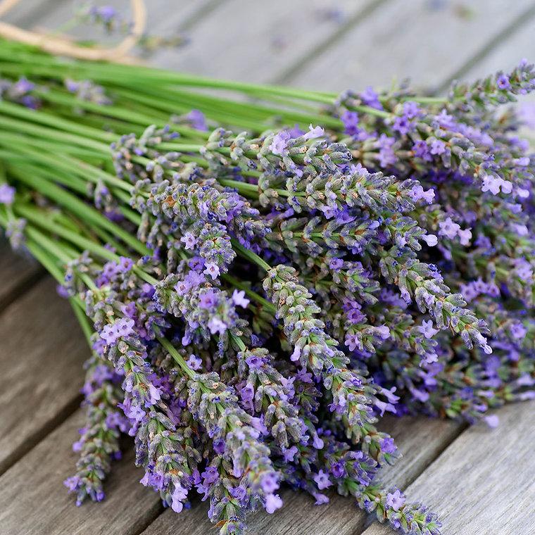 Lavender_1000px.jpg