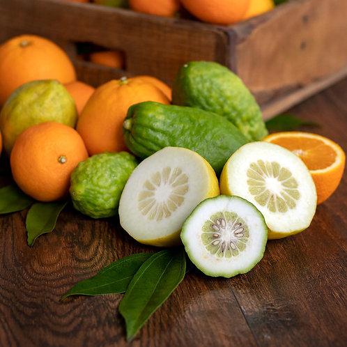 Citron + Mandarin Candle or Melts
