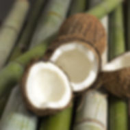 Bamboo-and-Coconut-fragrance-oil.jpg