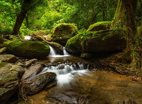 7 Animals to Watch at Cascada Elysiana