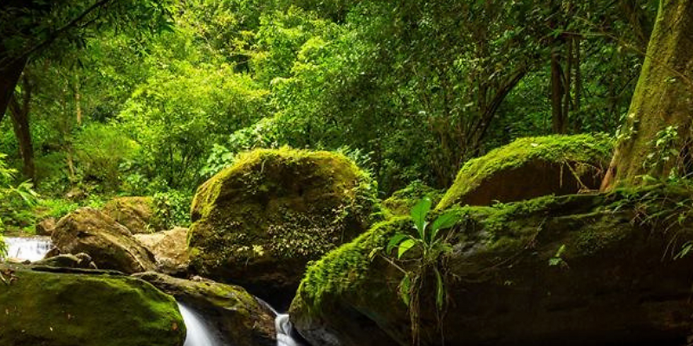 Get Back to Nature Jungle Retreat by Deloris Macneill