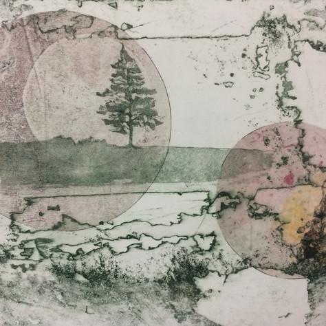 Lonesome Pine