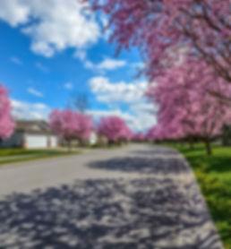 neighborhood-2486077_1280.jpg
