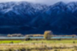 Waitaki Valley - Scott Milne (2).jpg