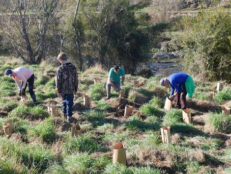 800 NATIVE PLANTS PLANTED AT CLIFTON FALLS