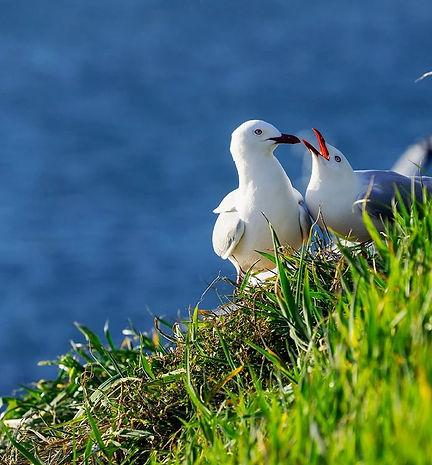 Sea Birds.JPG