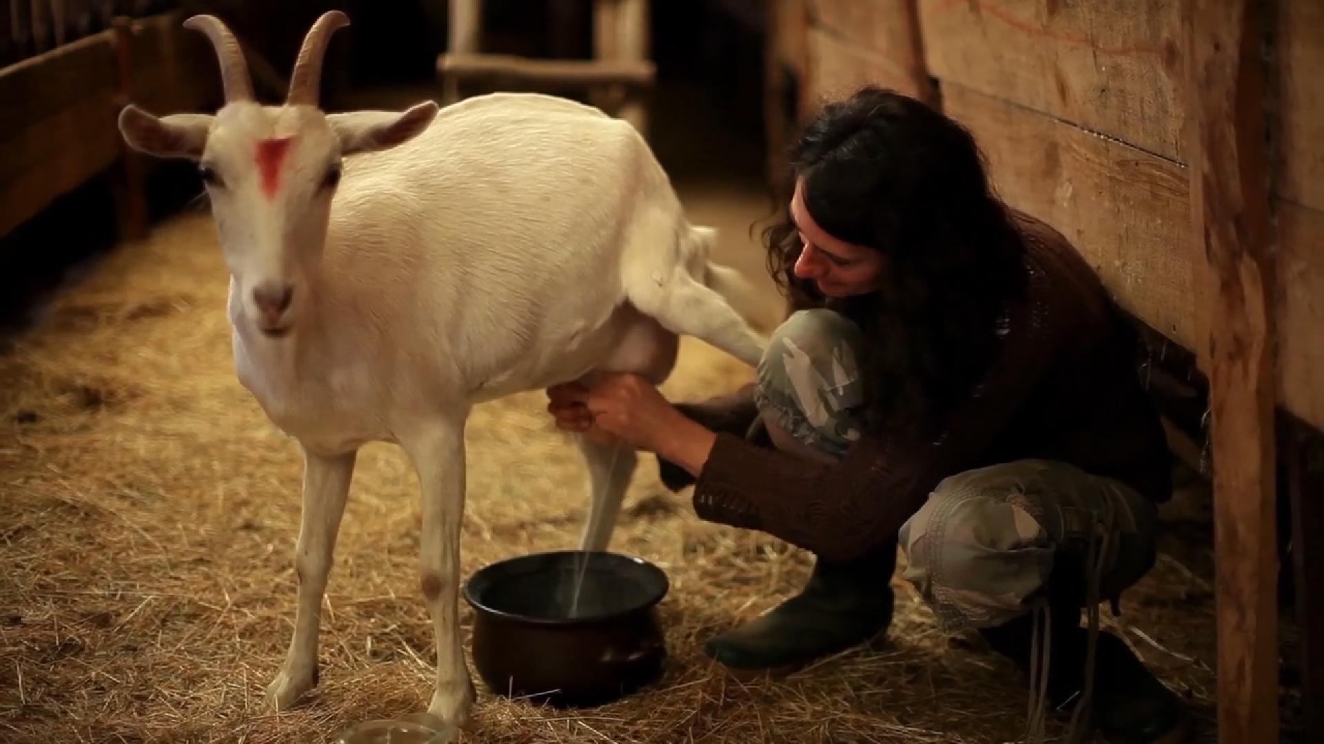 Entre cabras y hierbas